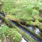 Альтернатива Греции 8212 это база Талвисъярви турбаза Талвисъярви в Карелии отдых летом и осенью