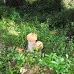 Олег и Александр фото Карелия Талвисъярви турбаза Талвисъярви в Карелии отдых летом и осенью