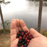 Отдохнули в Карелии турбаза Талвисъярви в Карелии отдых летом и осенью
