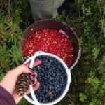 Отдых на 5 баллов на базе Талвисъярви турбаза Талвисъярви в Карелии отдых летом и осенью