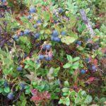 Сбыча мечт на базе Талвисъярви турбаза Талвисъярви в Карелии отдых летом и осенью