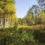 Если я заболею к врачам обращаться не стану8230 турбаза Талвисъярви в Карелии отдых летом и осенью
