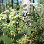 Побывали в сказке турбаза Талвисъярви в Карелии отдых летом и осенью
