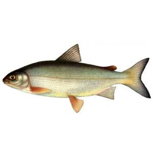 Рыбалка в Карелии турбаза Талвисъярви в Карелии отдых летом и осенью