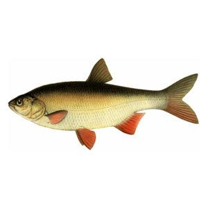 Язь Рыбалка в Карелии турбаза Талвисъярви в Карелии отдых летом и осенью