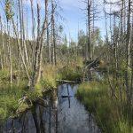 Абсолютный отрыв от цивилизации 8212 мы окунулись в другой мир турбаза Талвисъярви в Карелии отдых летом и осенью